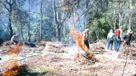 Lane Cove Pile Burning 2002